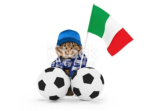 istock Funny cat with soccer ball on white background