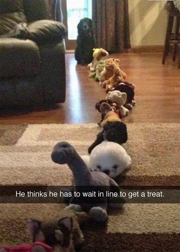 3 He Thinks He Has To Wait In Line To Get A Treat