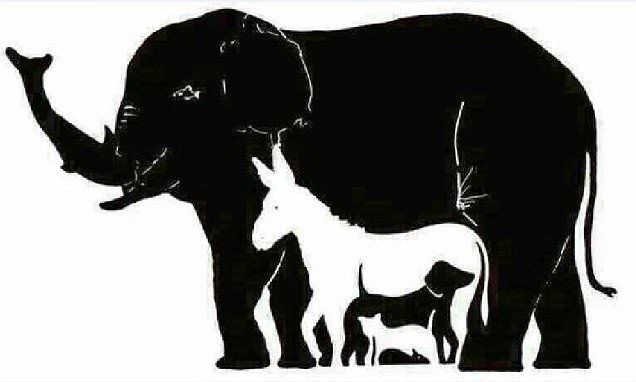 How many animals can YOU see Tricky wildlife brainteaser featuring 16 beasts leaves the Internet baffled