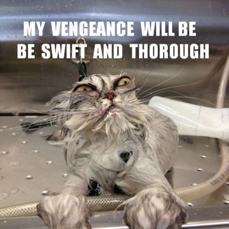 Top 20 Funniest Angry Cat Memes Here is a collection of some of the funniest angry cat memes you ll see anywhere