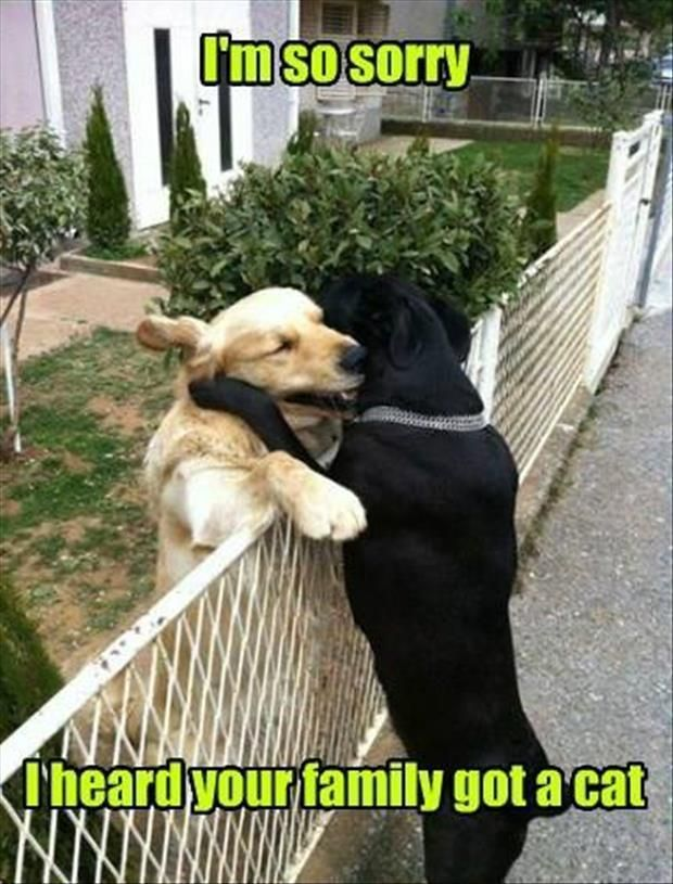 Funny Animal The Day 27 Pics