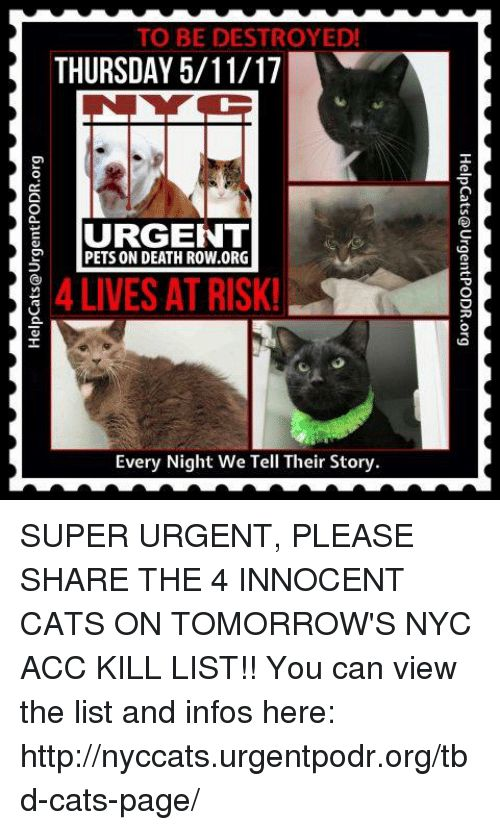 Cats Memes and Pets TO BE DESTROYED THURSDAY 5 11