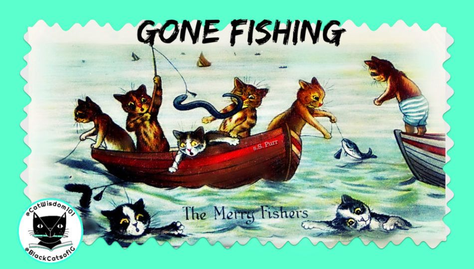 Funny Cats Gone Fishing For Catnip