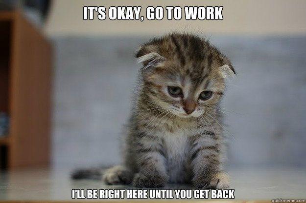 every morning say goodbye every evening say hi to a sad kitty