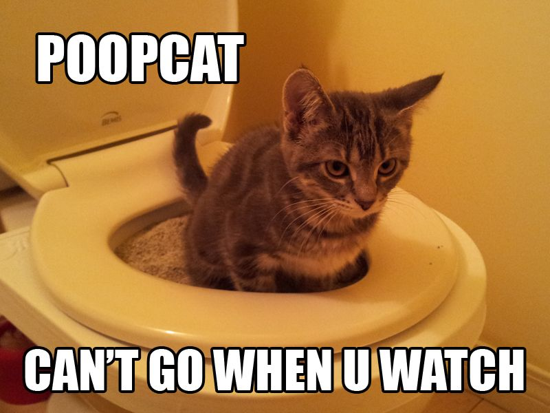 scared funny cat · poopcat can t poo