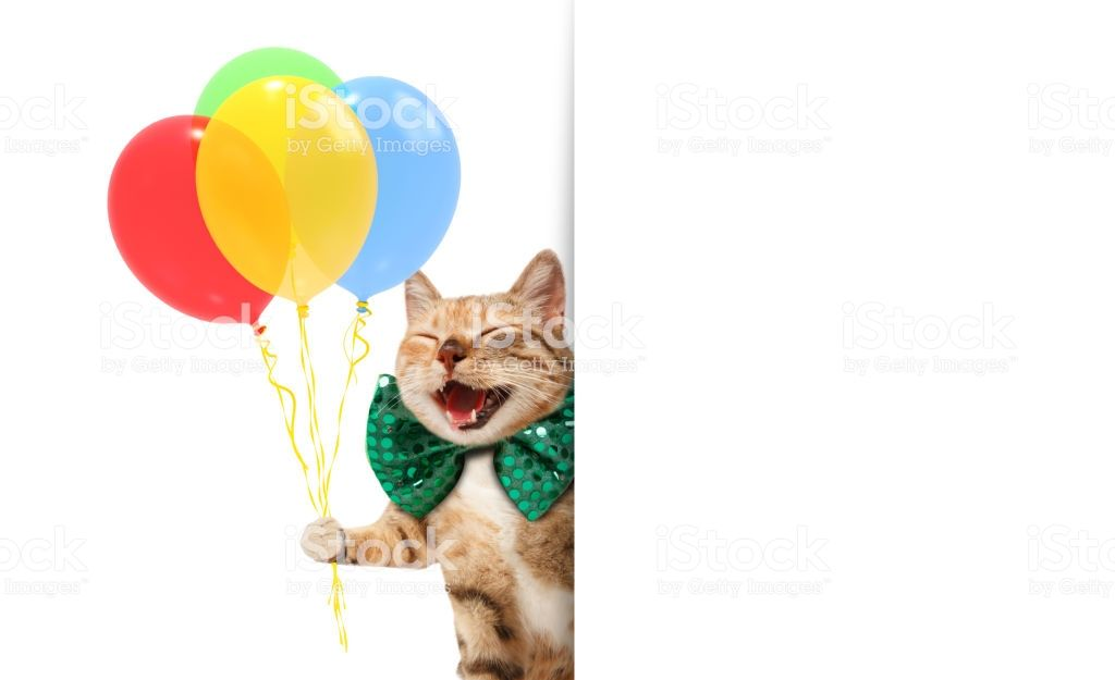 Funny cat is wearing a festive clothes and holding balloons White label for text Stock image