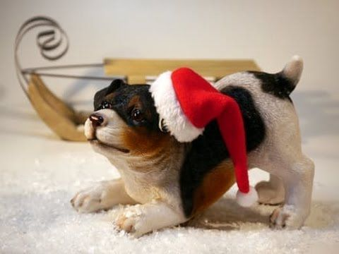 Grab Hold Of the Incredible Funny Dog Holiday Pictures