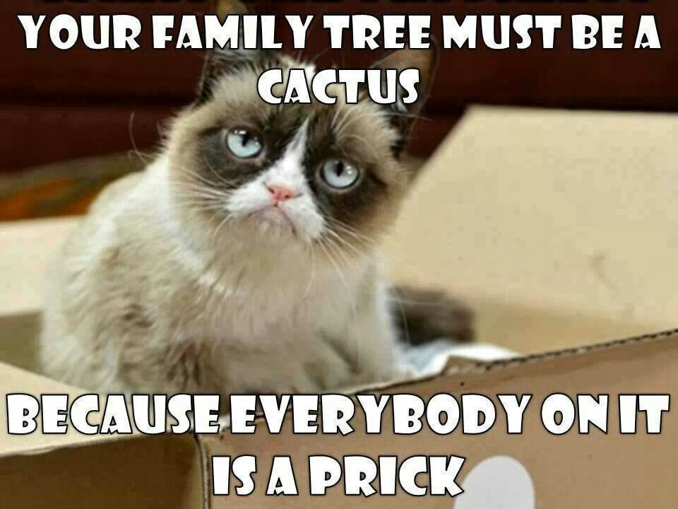 Grab Hold Of the Incredible Funny Memes Grumpy Cat