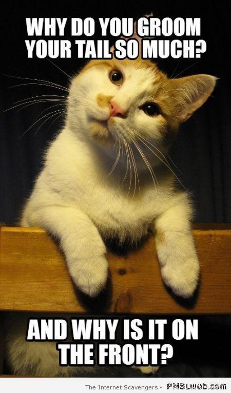 Funny curious cat meme at PMSLweb