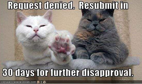 funny cat puter 20