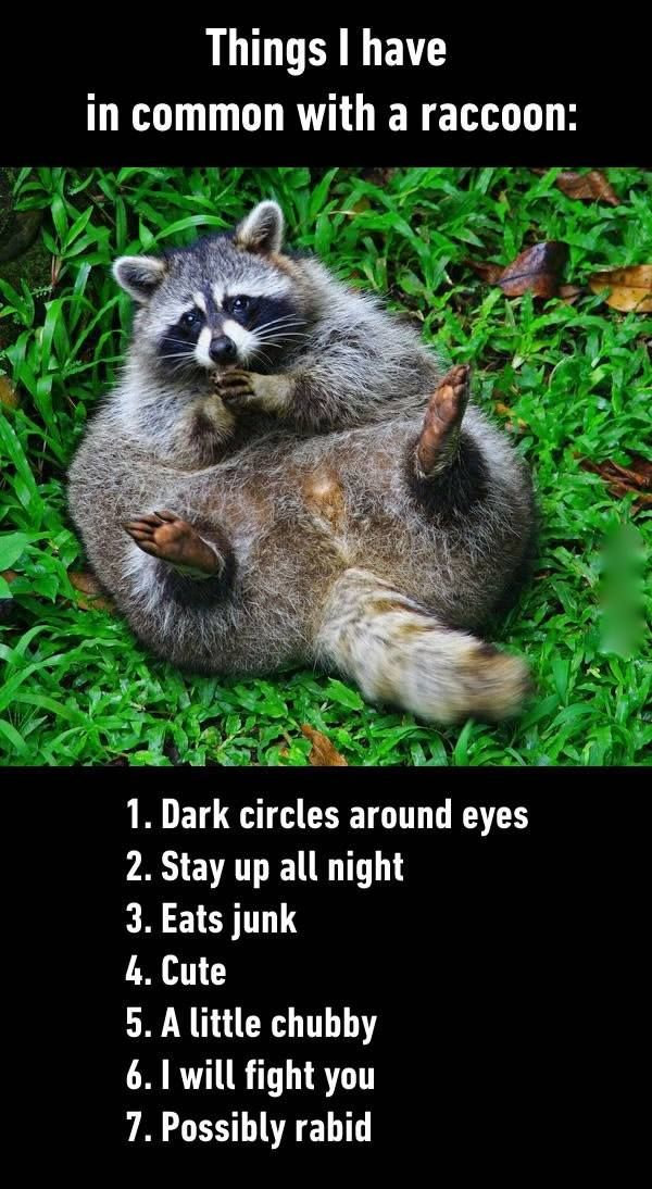 Things I Have In mon with a Raccoon funny animal