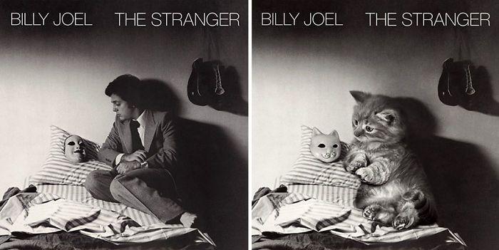 Funny Kitten Album Covers