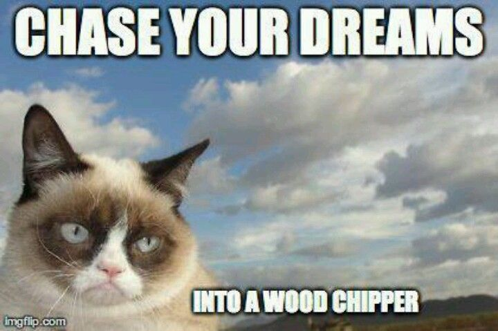 Chase You Dreams Into A Wood Chipper Funny Grumpy Cat Picture