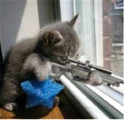 funny cats guns