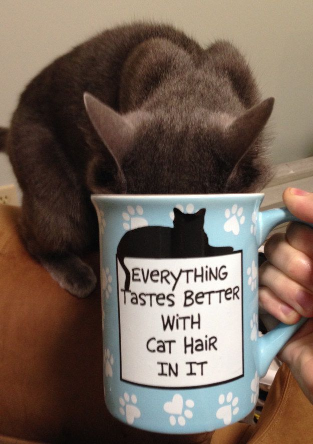You can t fight cat hair – you just have to accept it as part of your life now
