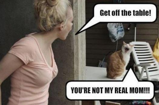 Funny Cat Memes 1