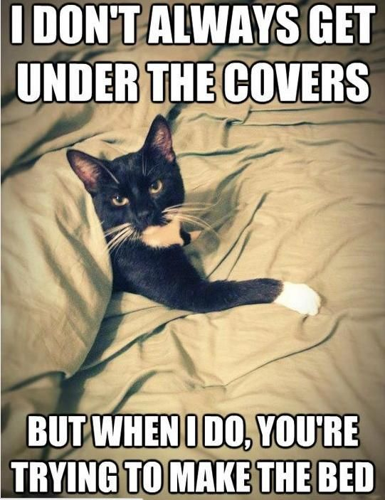 Grab Hold Of the Inspirational Funny Cat Owner Memes