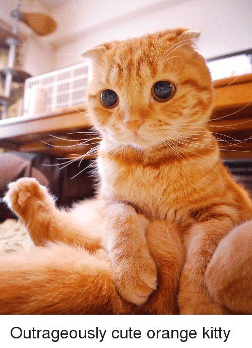 Cute Meme Meme · cute · Orange · kitty