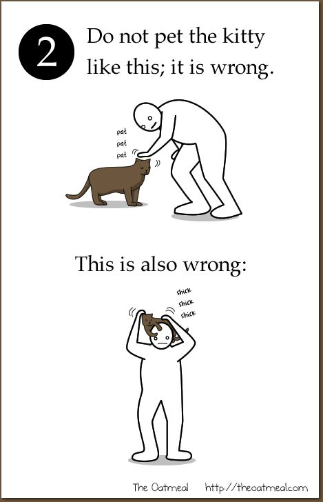 How to properly pet your kitty cat