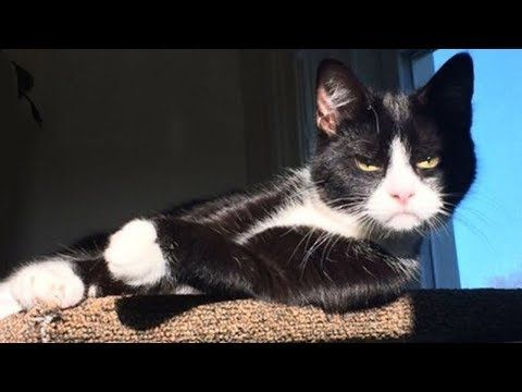 Funniest 😠Cats and 🐶 Dogs Awesome Funny Pet Animals Life Videos 😇