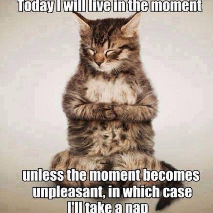 Funny Cute Fat Cat Funny Quotes