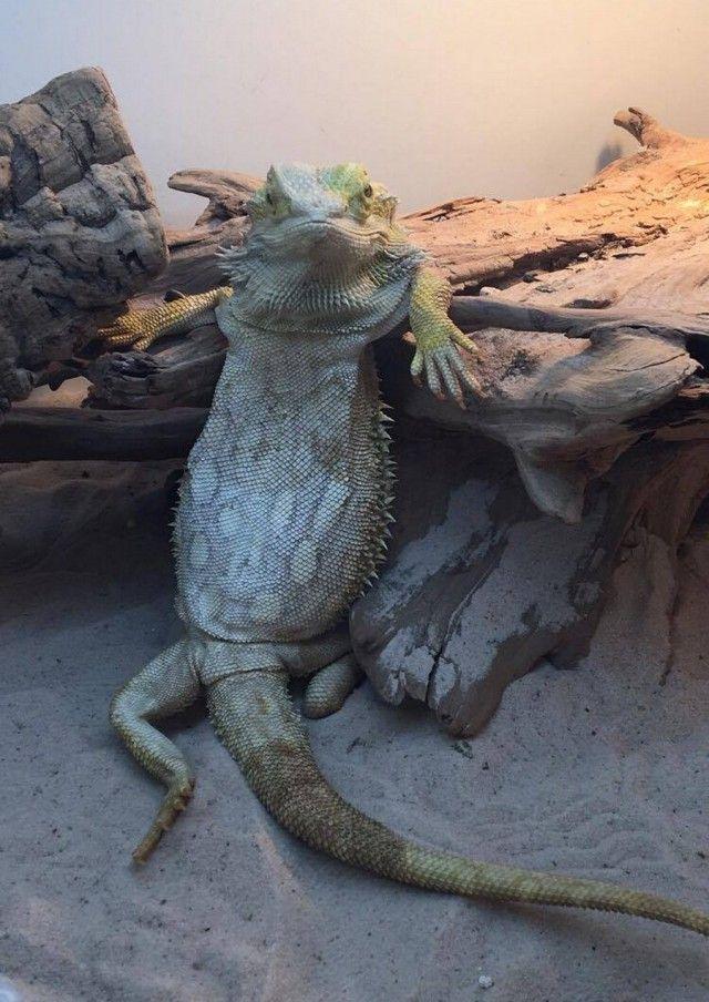 Подборка интересных и весеРых картинок Funny shop Funny Reptiles Funny Animals