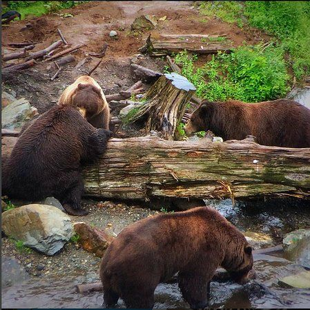 Fortress of the Bear