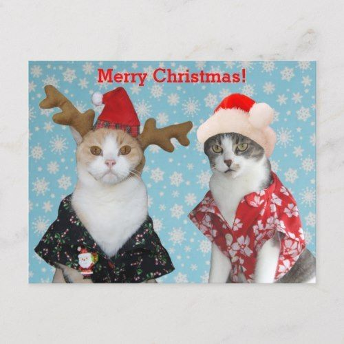 Funny Cats in Hawaiian Christmas Shirts Holiday Postcard