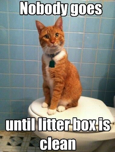 Nobody goes until the litter box is clean cats litter