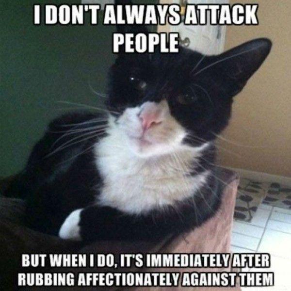 cat meme funny cat memes cute cat meme