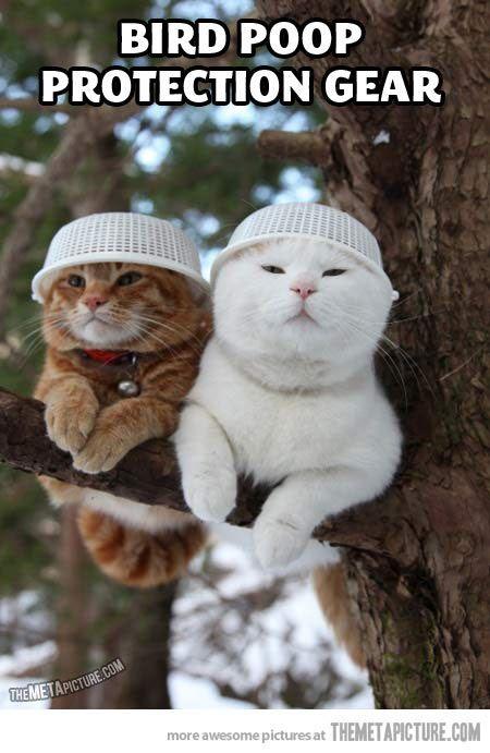 Funny cat kitten hats tree birds