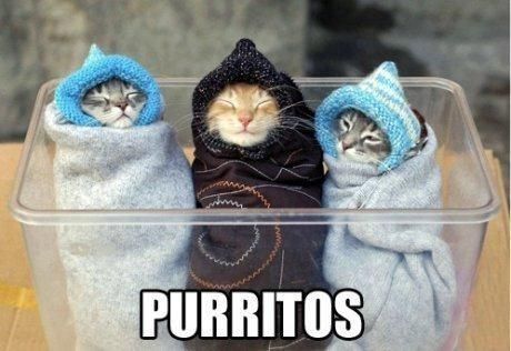 Posts Details Tags Cute cat picture Purritos Categories Funny animal memes jokes and pictures Funny pictures