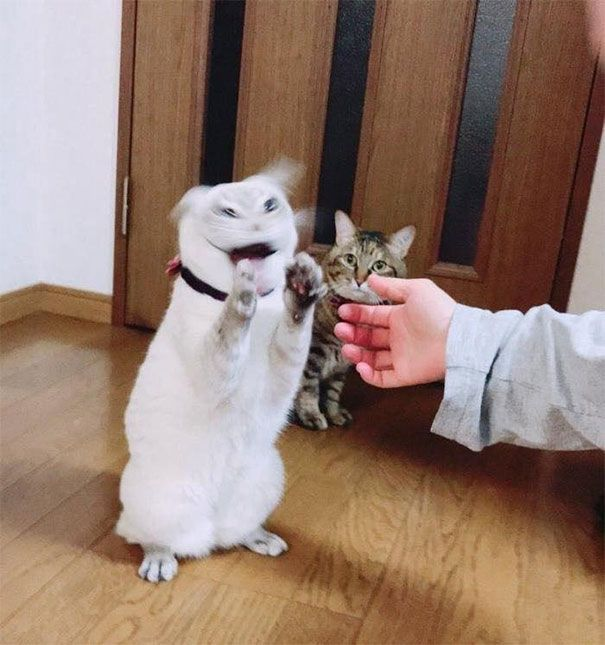 64 Cat Is Possessed By The Devil