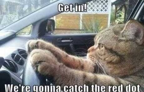 funny cats cats in car going catch red