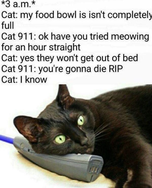 20 Funny Cat CatGatos