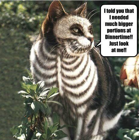 costume halloween skeleton Cats
