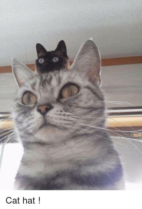 Memes 🤖 and Cat Cat hat