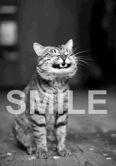 Funny & Cute Cat Black and White graphy