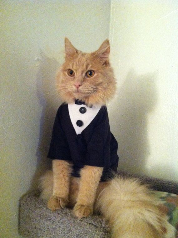 This cat just wanted to look smart Picture Etsy Catclothing