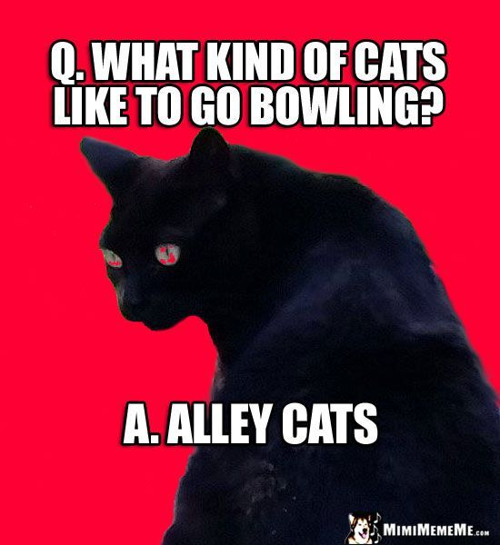 Feral Cat Joke What kind of cats like to go bowling Alley Cats