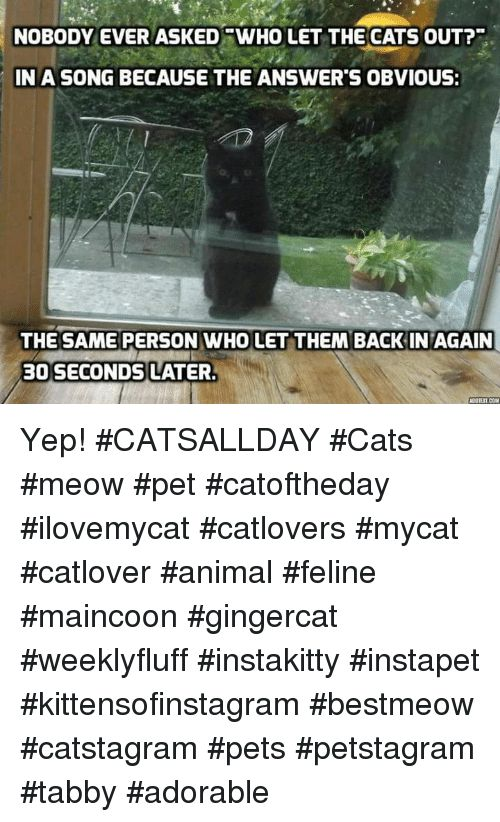Memes A Song and Adorable NOBODY EVER ASKED SWHO LET THE CATS OUT
