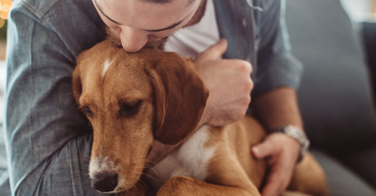 Emotional support animals there s surprisingly weak scientific evidence on whether they help Vox