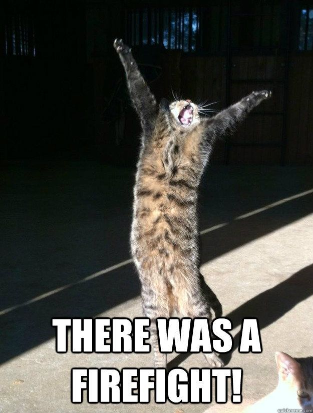 there was a firefight Funny Cat Humor Funny Animal Sayings Funny Baby Animals