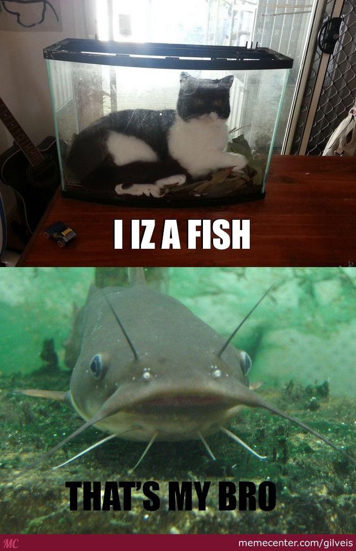 New Kind Catfish
