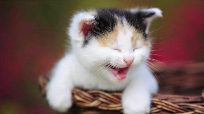 cute cat happy 4741