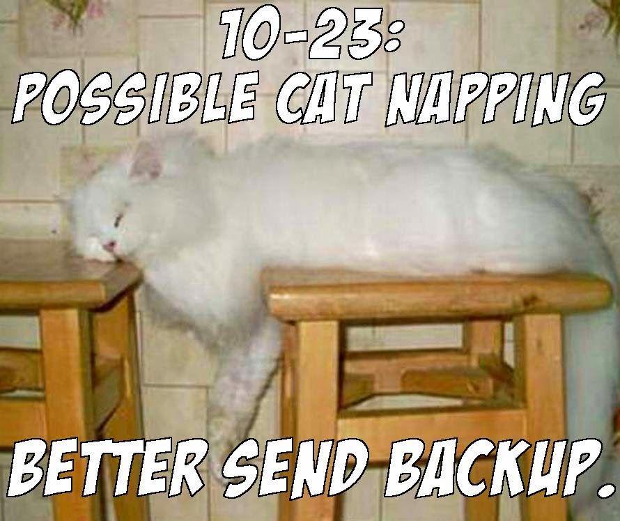 cat backup napping meme