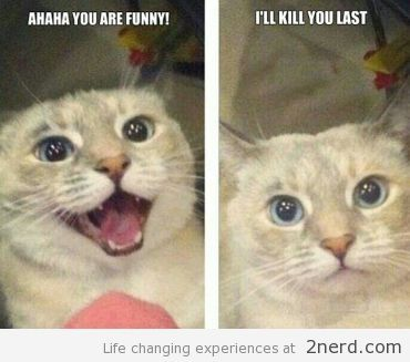 Grab Hold Of the Marvelous Funny Narnia Cat Memes