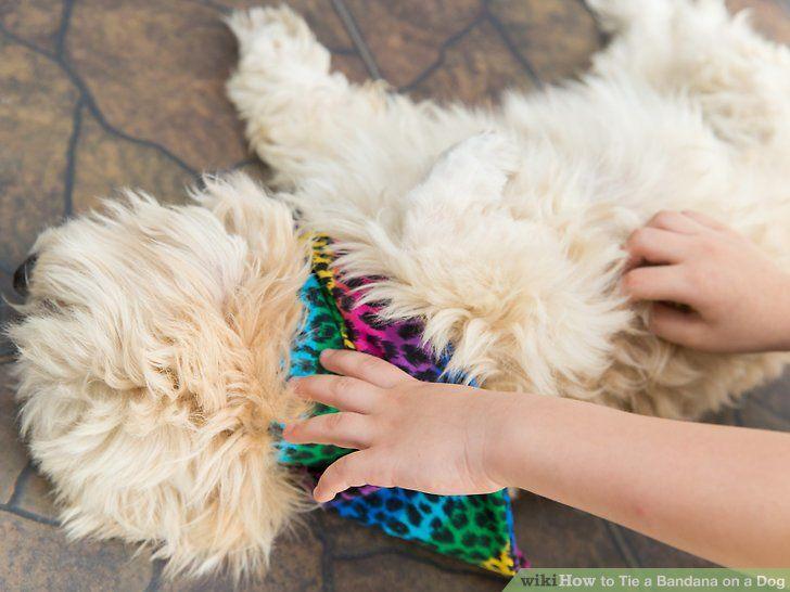 Image titled Tie a Bandana on a Dog Step 9