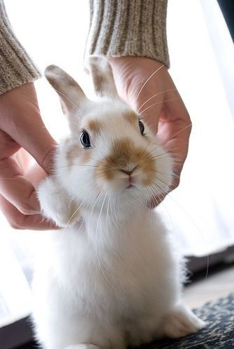 This guy gives Peter Cottontail a run for his money too cute