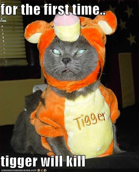 Cat Halloween Funny Pics with Funny Captions Cat Halloween funny picture Funny Cat Halloween funny Cat Halloween photos funny Cat Halloween
